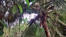Vende-se Sitio Próximo Da Agrolusa Estrada De Iguaíba