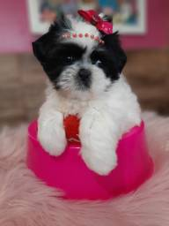 Boneca linda !!!! Shih tzu mini