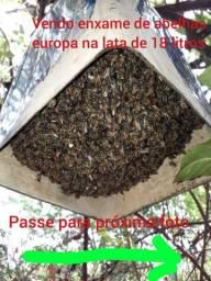 Mel, abelhas, enxame