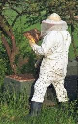 Caixa de abelha, já com abelha!!