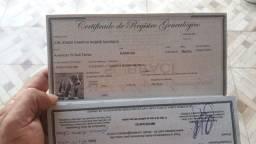 Título do anúncio: Pitbull com registro pedigree