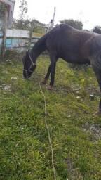 Cavalo mouro pro brik