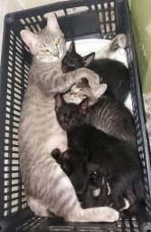 Doação filhotes gatinhos