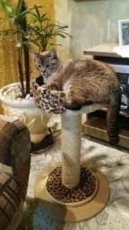 Arranhador para gatos, Pronta entrega
