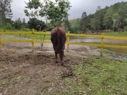 Hospedagem para cavalos