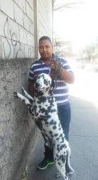 Adestramento de Cães BH