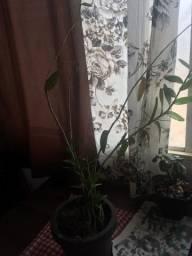 Plantas (sou de Franca)
