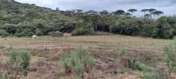 Título do anúncio: Terreno 3 hectares a venda!