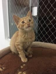 Gato macho laranja, adoção responsável