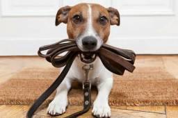 Dogwalker ( Passeador de Cães )