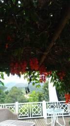 Muda de flor de jade