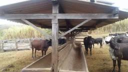 Fazenda 63 ha onça de pitangui