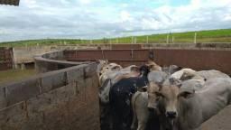 Fazenda de 500 alqueires- Região de Presidente Prudente ( pecuária , soja ou cana)