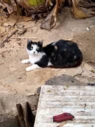 Gato para doação