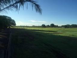 Fazenda 1826 hectares Pantanal MS