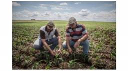Título do anúncio: Assistência Técnica em Chácaras, Sitios, Fazendas, torne sua propriedade produtiva;