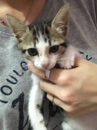 doação de gata fêmea
