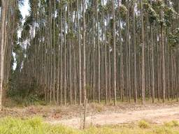 Fazenda com  317 alqueires com eucalipto, arrendado até 2024 (Nogueira Imóveis Rurais)