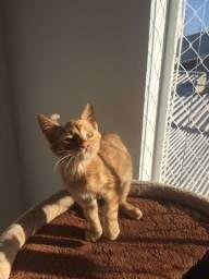 Adoção Responsável gato Amarelo