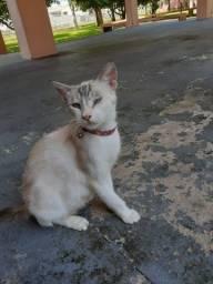 Gatos castrada para adoção