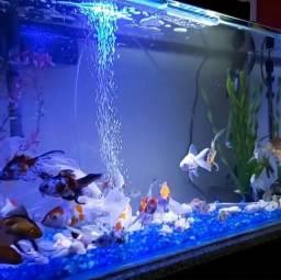 Lindo aquário 110 litros