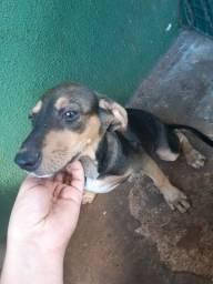 Doação Cachorrinhos