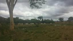 Fazenda 123 alqueires, plana, cultura 61 98665 2087