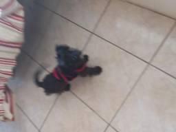 Cachorro 4 meses