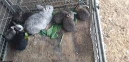 Filhotes de coelhos
