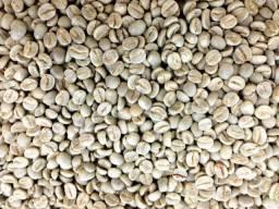 Semente cafe arábica