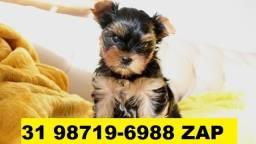 Canil Lindos Filhotes Cães BH Yorkshire Basset Poodle Shihtzu Lhasa Maltês