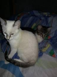 Doação de 3 gatinhos, Super Saudáveis e Carinhosos, 3 meses lindos e fofinhos