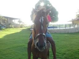 Cavalo de 2 anos e 11 meses