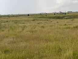 Fazenda 1020ha/Pecuária/Soja/Taim