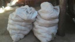 Vendo sacos de piqui intrego na casa