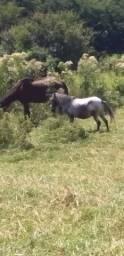 Vendo poney fêmea