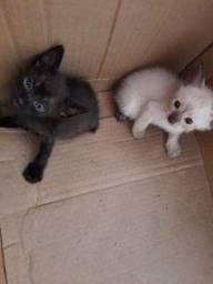 Doa - se gatinhos filhotes