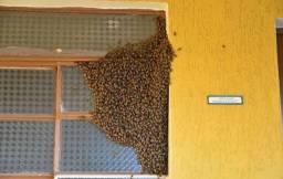 Captura de abelhas - Me chama