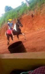 Cavalo mangalarga pampa