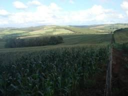 Fazendinha para plantio de soja, milho ou trigo, com boa produção