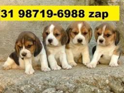 Canil Filhotes Cães Top BH Beagle Lhasa Poodle Yorkshire Shihtzu Basset Maltês