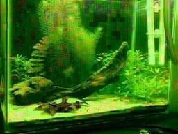 Aquario/decoro/projetos.