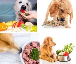 Aprenda 20 Receitas para Cães Alimentação Natural Você Ama Seu Pet ?