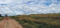 Fazenda próximo de Porto Velho