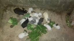 Filhotes de coelhos fofos