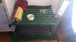 Gaiolas para Twister, Rato, Porquinho da india