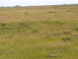 Fazenda 2550ha/Taim/Rio Grande