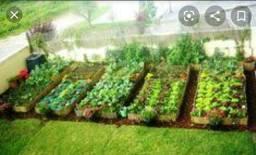 Contrata-se ajudante para cuidar de horta caseira.