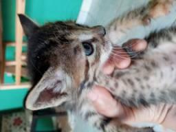 Doação(gatos)