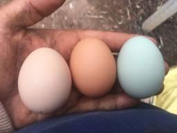 Ovos caipira | Galados ou para consumo